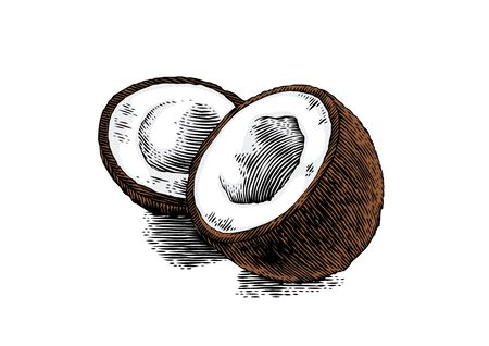 Two pieces of coconut with pulp Illustration