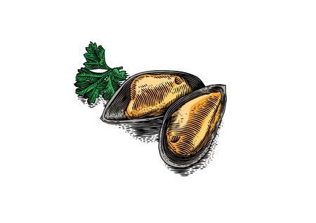 新鮮なパセリを半分のシェルのムール貝の 2 つの図面  イラスト・ベクター素材