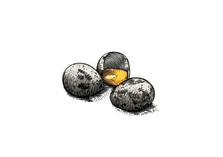 Two wholes and one broken quail eggs, hand drawn illustration graphic design.