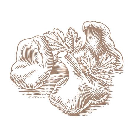 Hoop cantharellen met verse groene peterselie Stock Illustratie