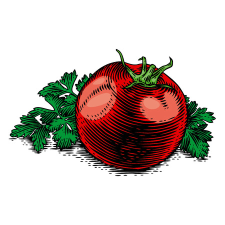 Fresh red tomato with green parsley. Illustration