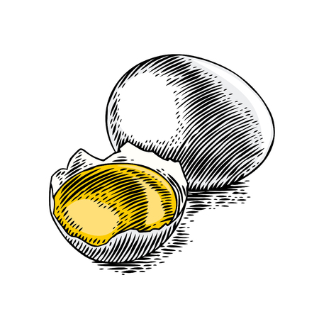 Drawing of whole egg and yolk in the eggshell. Ilustração