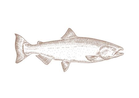 Dessin de saumon vivant isolé sur le blanc Vecteurs