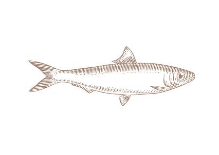 Disegno di pesce sardine vivo isolato sul bianco