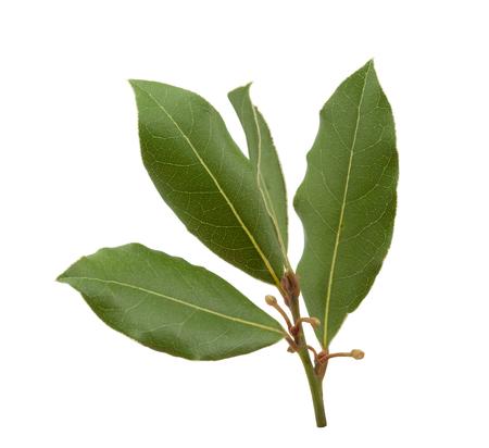Geïsoleerde tak van groen laurierblad op de witte achtergrond