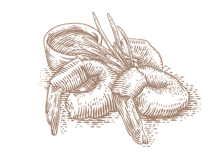 Drawing of three shrimps with sauce and leaves of rosemary