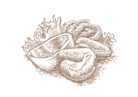 Drawing of shrimp, squid, octopus and mussels with fresh green lettuce