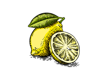 Drawing of fresh yellow lemon on the white background