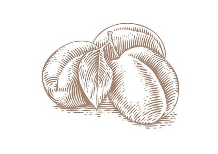 Dessin de trois prunes entières avec feuille sur le blanc