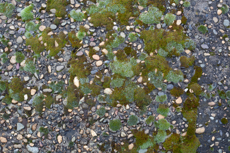 Texture of pebble inlay in concrete with green moss