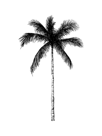 Vector palmiers dessinés à la main. Illustration de style gravé été tropical. Parfait pour les invitations, cartes de v?ux, affiches. Banque d'images - 81458841