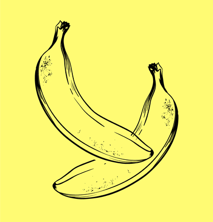 Vector hand drawn banana. Tropical summer fruit engraved style illustration. 일러스트