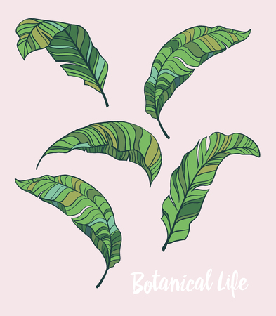 Tropical leaves vector set 일러스트