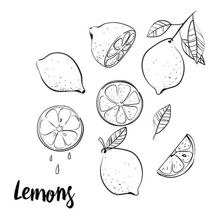벡터 손으로 그린 된 레몬, 열 대 과일 낙서 스케치.