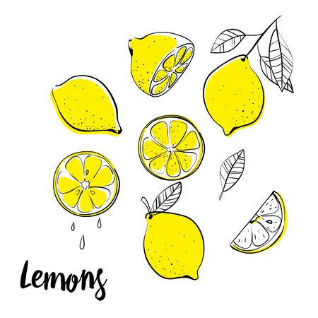 Vector hand drawn lemon. Tropical fruit. Sketch. Doodle. Perfect for summer design.