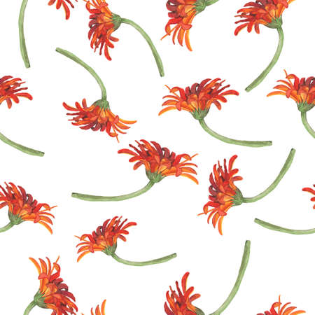 Seamless pattern with red gerbera daisy flowers on white background. Hand drawn watercolor illustration. Banco de Imagens