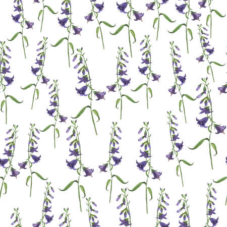 Wild bell flower. Hand drawn illustration.