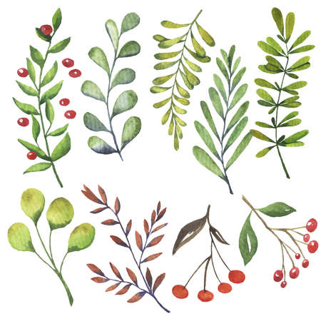 Green leaves and autumn berries set painted by watercolor. Hand drawn illustration. Banco de Imagens - 104462611