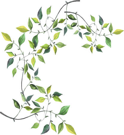 Green branches drawn by watercolor on white background. Hand drawn illustration.