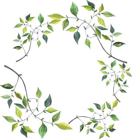 Green branch laurel drawn by watercolor. Hand drawn illustration. Ilustração