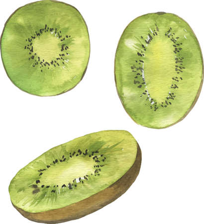 Set of kiwi slices on white background. Hand drawn vector watercolor illustration.