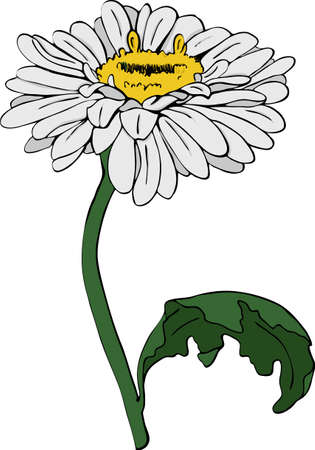 Camomille flower isolated on white background. Hand drawn vector illustration. Ilustração