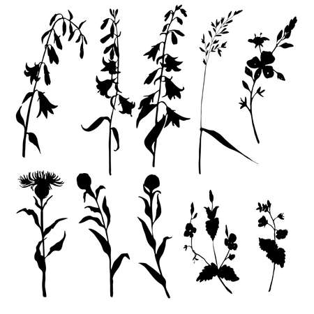 Silhouette grass and herbs. Ink sketch. Hand drawn vector illustration.