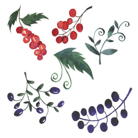 Set of green branches with leaves and berries isolated on white background. Floral design elements. Hand drawn watercolor illustration.