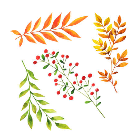 Set of forest autumn branches isolated on white background. Hand drawn  illustration.