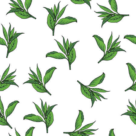 Seamless pattern with green tea leaves on white background. Hand drawn vector illustration.