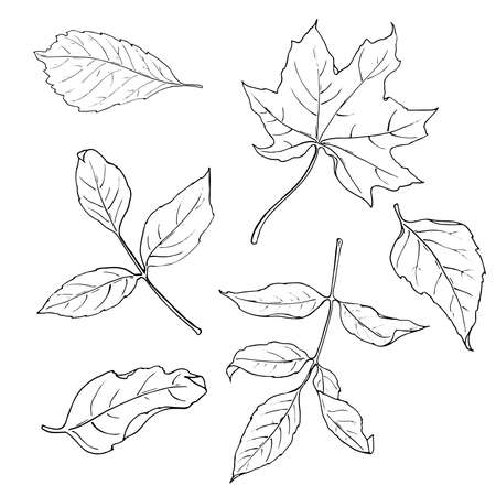 Set of fall leaves isolated on white background. Monochrome ink sketch. Hand drawn vector illustration. Ilustração