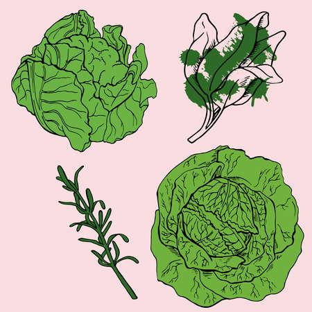 Set of cabbage, sage and thyme on pastel pink background. Doodle ink sketch. Hand drawn vector illustration. Иллюстрация