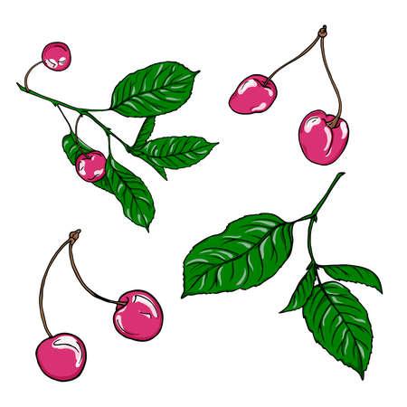 Set of pink cherry berries and leaves on white background. Hand drawn vector illustration. Ilustração