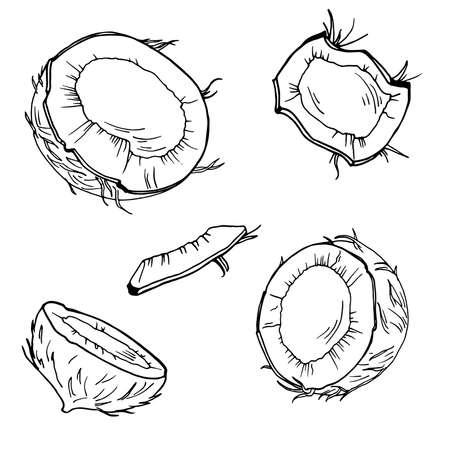 Set of coconut pieces on white background. Hand drawn ink sketch. Vector illustration. Ilustração