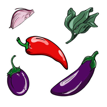 Set of violet eggplants, fresh sage, piece of red onion and chili on white background. Hand drawn vector illustration. Banco de Imagens - 105402945