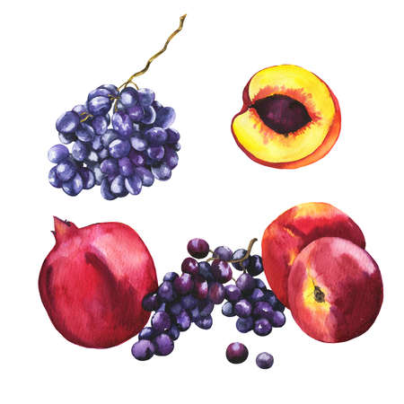 Set of fresh fruit. Pomegranate, peach, nectarine, dark grape on white background. Hand drawn watercolor illustration. Фото со стока