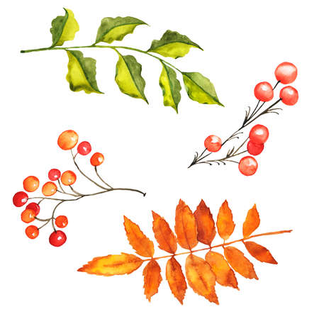 Set of green and yellow leaves and branches with red berries. Hand drawn watercolor illustration.