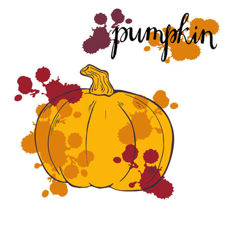 Pumpkin set sketch drawn by ink. Hand lettering. Bright colored backdrops. Hand drawn vector illustration.