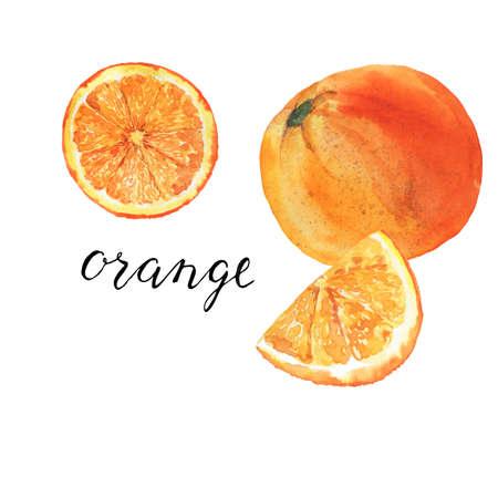 Set of orange and orange slices with hand lettering. Hand drawn  illustration.