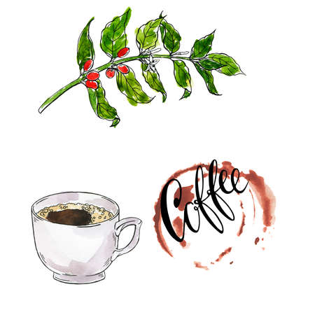 White cup of coffee or espresso. Coffee tree branch. Hand lettering. Hand drawn watercolor and ink illustration.
