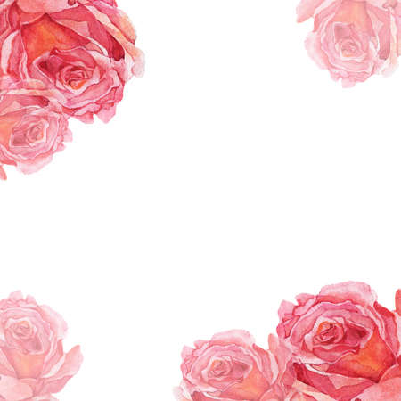 Pink rose background painted by watercolor on white background.Hand drawn illustration. Banco de Imagens