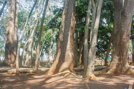 weald: Trees