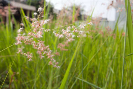 flower close up: Grass Flower Close Up Stock Photo