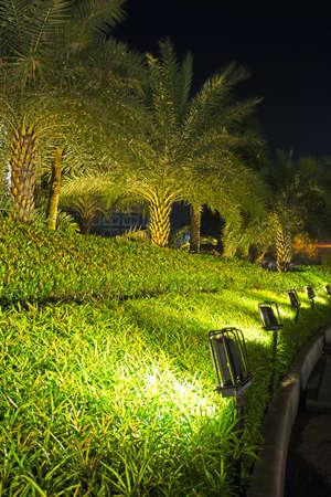 illuminated: Lamps Illuminated Plants and Garden
