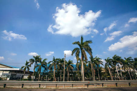 road side: Palm Trees on road side