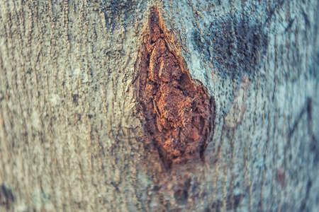 bark peeling from tree: texture of tree bark split Stock Photo