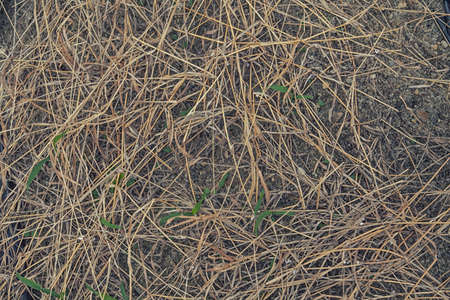 scattered: dry straw scattered texture