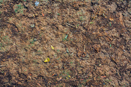 topsoil: Topsoil Fertile Soil