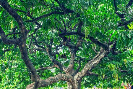 twiggy: Tree Trunk Branches Photo Stock Photo
