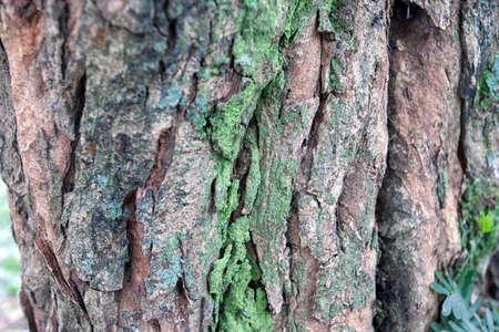 bumpy: mossy tree bark bumpy